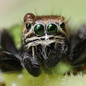 by Ivan Marjanovic - Animals Insects & Spiders (  )