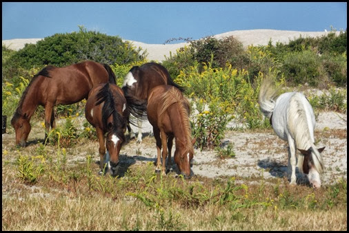 Assateague Tuesday 034