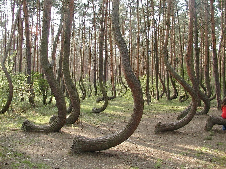 crooked-forest-6