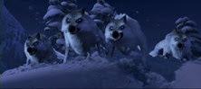 18 les loups