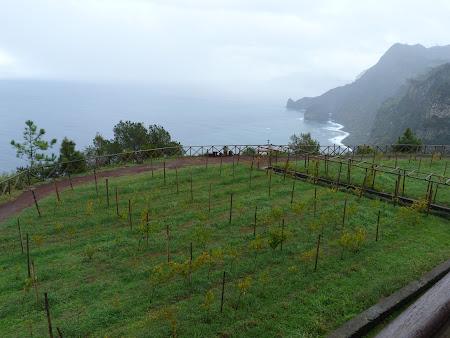 Imagini Madeira: priveliste Quinta de Furao