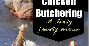 Backyard Chickens 101: Thinning the Flock