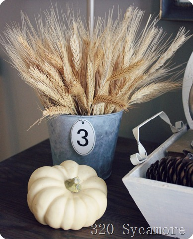 fall autumn wheat pumpkin