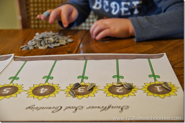Sunflower Seeds Counting Activity for Toddler and Preschool