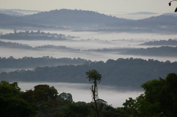 Camp Caïman, Montagne de Kaw (Guyane), 14 novembre 2011. Photo : J.-M. Gayman