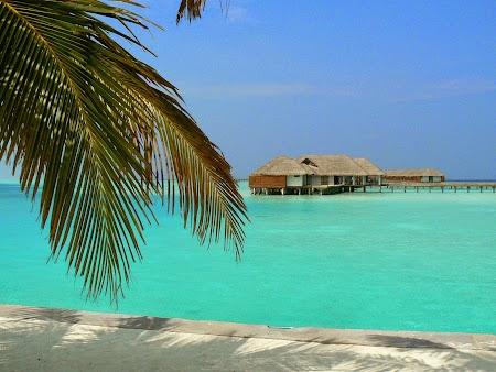 11. Palmier in Maldive.JPG