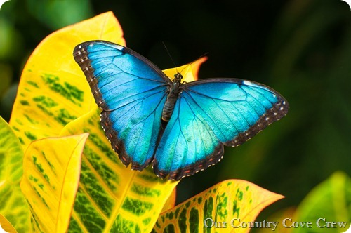 butterfly conservatory (1 of 1)-3
