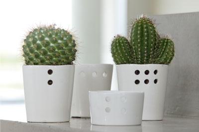 Decorar con cactus una planta con la que no pinchar s for Cactus cuidados exterior