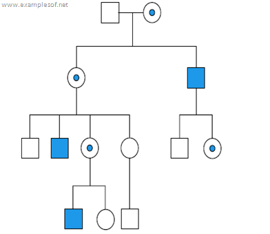Pedigree showing X linked recessive disorders