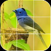 bird games puzzle