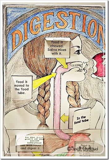digestivesystemposter