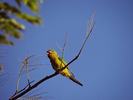 07. Papagal in Costa Rica.JPG