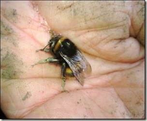 bee on my hand bg