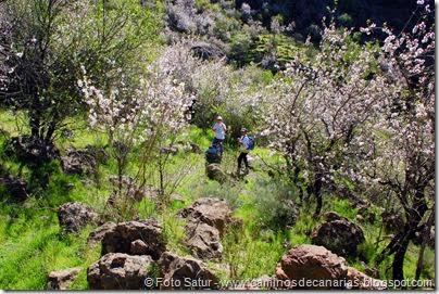 7445 La Goleta-La Candelilla(Camino entre Almendros)