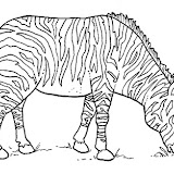 animales salvajes 5.jpg