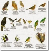 birds endemicas in Dominican Republic