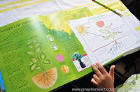 Botany Unit: Plant Life Cycle and Photosynthesis