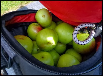 08b - The Apple Haul
