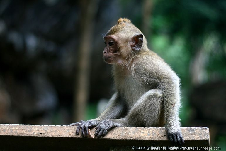 Sad Monkey Khao Sok
