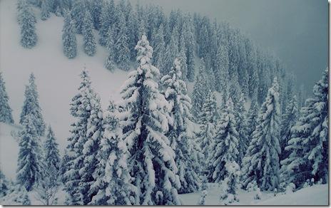 iarna-brazi-zapada