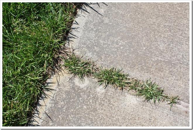 Grass growing on sidewalk.
