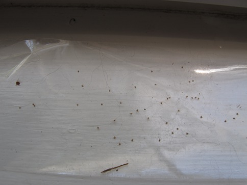 seed ticks on packing tape