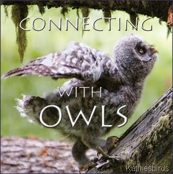4 Connecting-with-Owls-DVD-Pic
