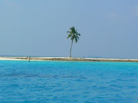Plaje si palmier Maldive