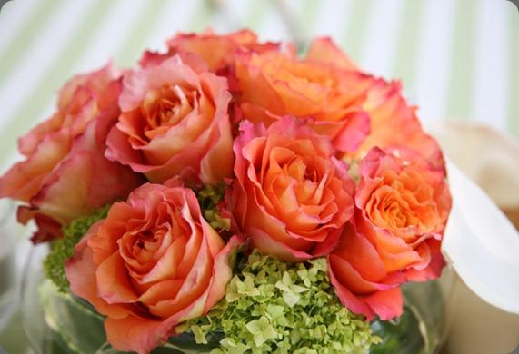 AO83  free spirit rose. holly chapple