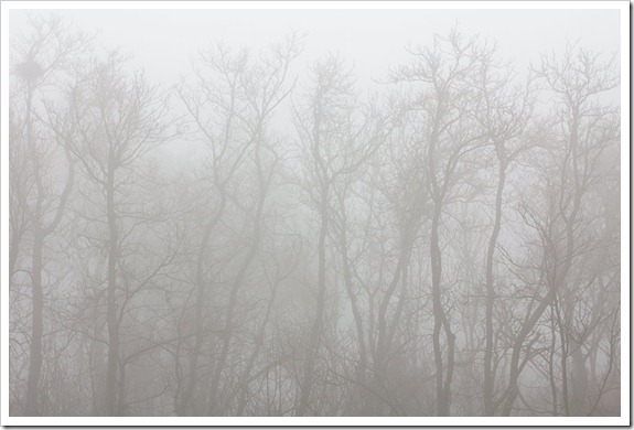 111220_fog_ghost_trees