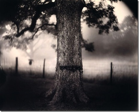 Scarred Tree, Sally Mann, 1996