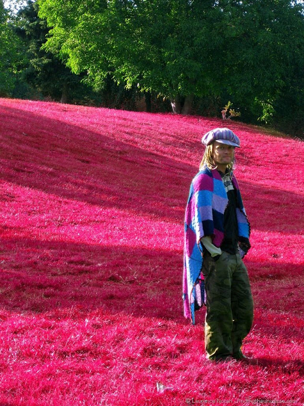Me in a strawberry field 3