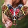 Ornate Lanternfly