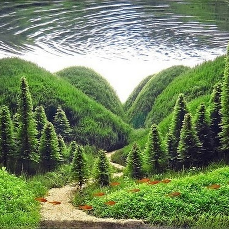 The Incredible Art of Underwater Landscaping for Aquariums