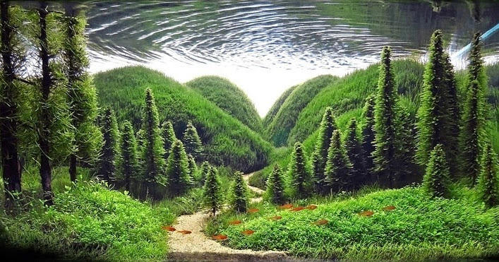 The Incredible Art Of Underwater Landscaping For Aquariums Amusing Planet