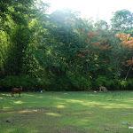 Тайланд 18.05.2012 5-16-33.JPG