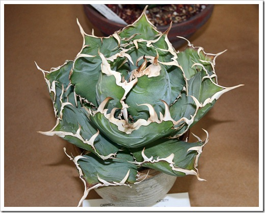 120519_CCSS_Agave-felipe-otero-Penny-Newell