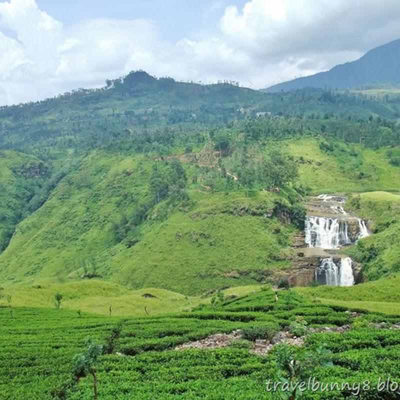 SRI LANKA - Nuwara Eliya