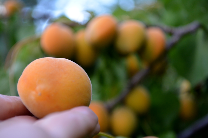 FruitShare3