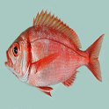 PescaMed icon