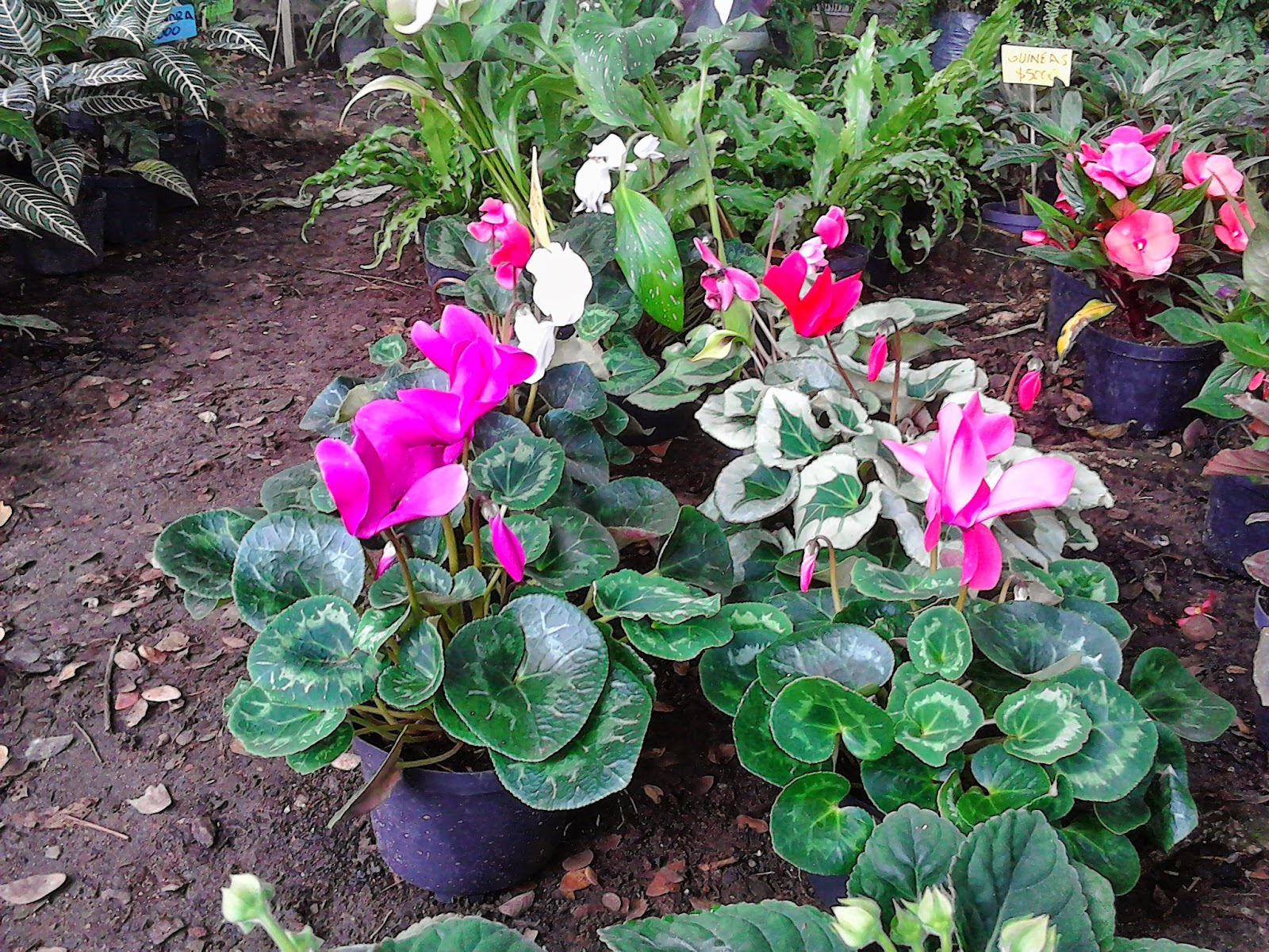 Plantas De Exterior De Sombra Beautiful Tipos De Plantas Para - Plantas-sombra-exterior