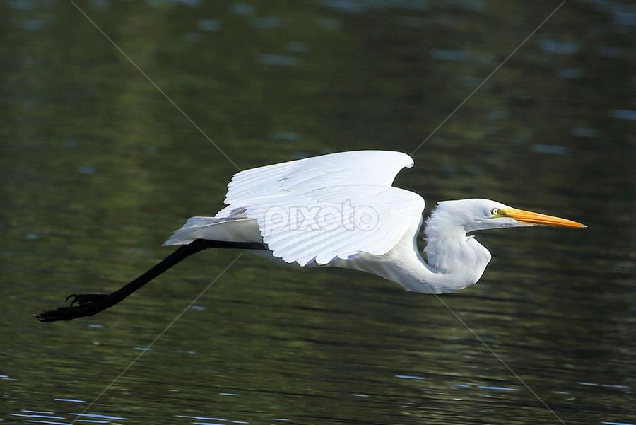 Thanksgiving Day 27 by Terry Saxby - Animals Birds ( bird, terry, florida, zephyrhills, usa, saxby, nancy,  )
