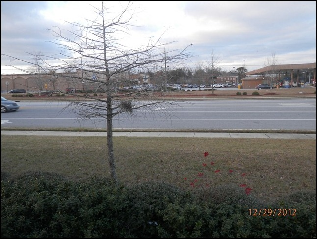 A vacant bird nest just outside our window at Wal-Mart.