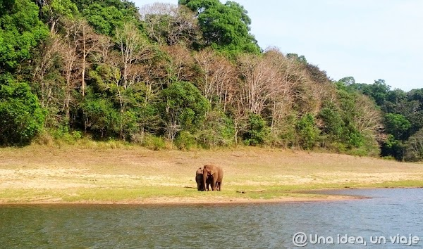 Kerala-Thekkady-Periyar-National-Park-unaideaunviaje.com-KeralaBlogExpress-2.jpg