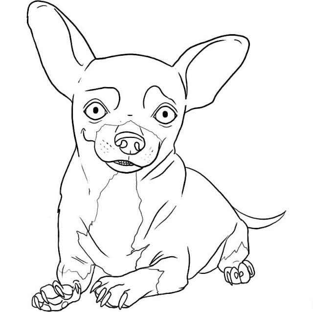 Dibujos De Chihuahuas Para Colorear