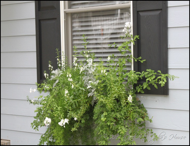 window box 12