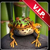 Toad live wallpaper
