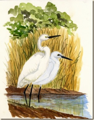 little egrets089 (2)