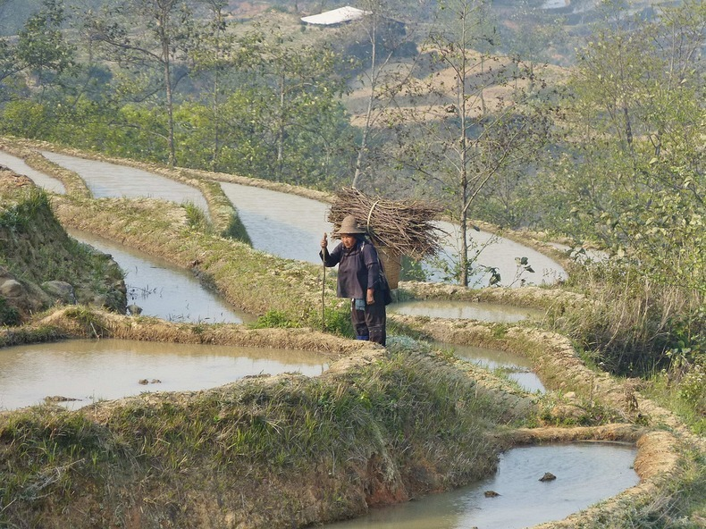 yunnan-rice-terraces-3