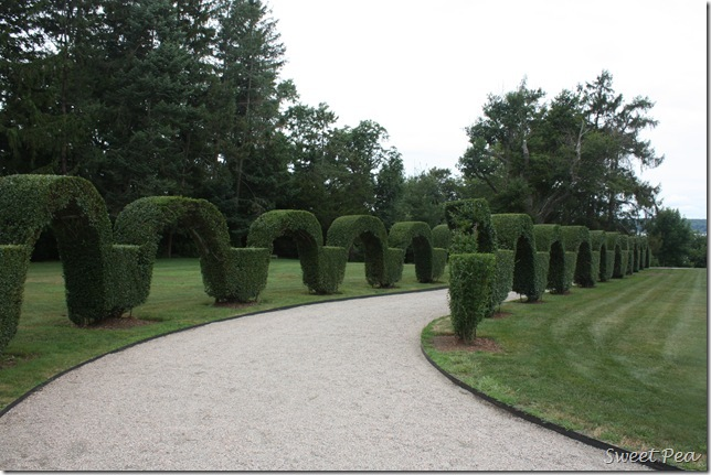 More Topiary2